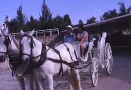 Phyliss Snider sitting in a carriage with an unknown man with two white horses pulling the carriage