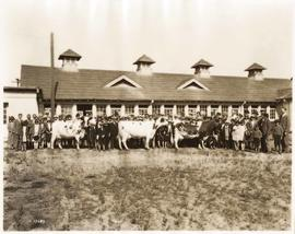 University of British Columbia Agricultural Department, people and livestock in front of building