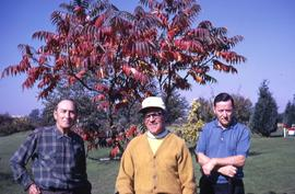 Three unknown men posing in front of a tree with pink leaves