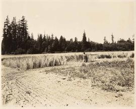 University of British Columbia, Agriculture Department fields