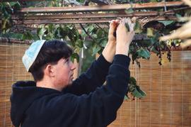 Teenage boy decorating sukkah
