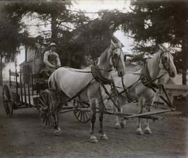 Sylvester's delivery horses