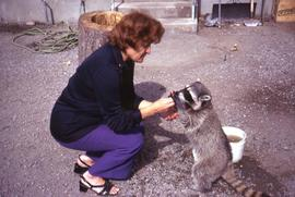 Phyliss Snider crouched down feeding a raccoon and the racoon is up on its hind legs