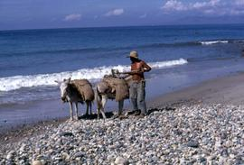 Man with two donkey's standing on a beach