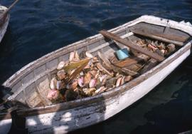 Boat filled with conch shells
