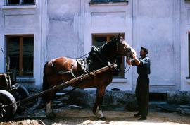 Man preparing the wagon attachments on a horse