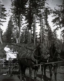 [Unidentified members of the Sylvester family on horse drawn buggy]