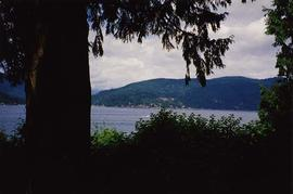 [Tree on the left of the image looking out at the water from the back deck of the Snider's h...