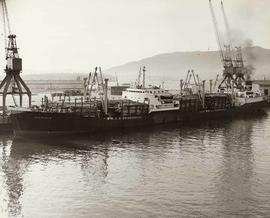 "The ship MS ""Duffield"" with a 23 ft. deck load of timber"