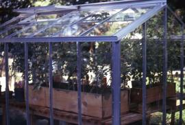 Plants in wooden planters in a greenhouse