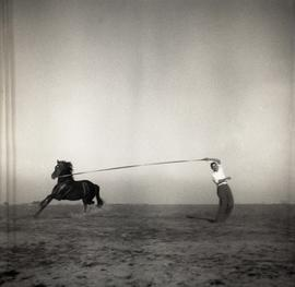 [Man lunging horse]
