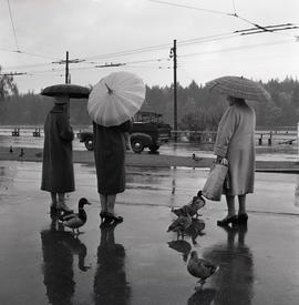[Women with umbrellas waiting for a bus]