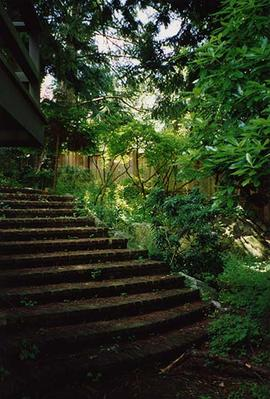 [Stairs leading up to the back of the Snider's home with over hanging trees]