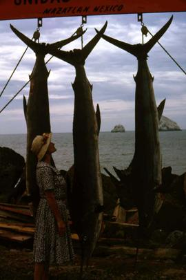 "Phyliss Snider looking up at three large fish hanging from a sign that reads: ""Mazatlan, Mex..."
