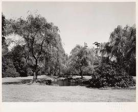 Willow trees, Stanley Park, Vancouver, British Columbia