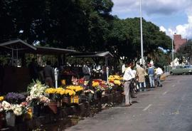 Zimbabwe outdoor flower market