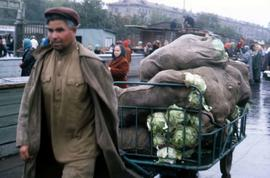 Man walking down the street, pulling a cart full of bags filled with cabbage
