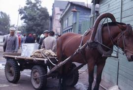 Horse standing on the street with a cart attached to it and a group of men standing behind it